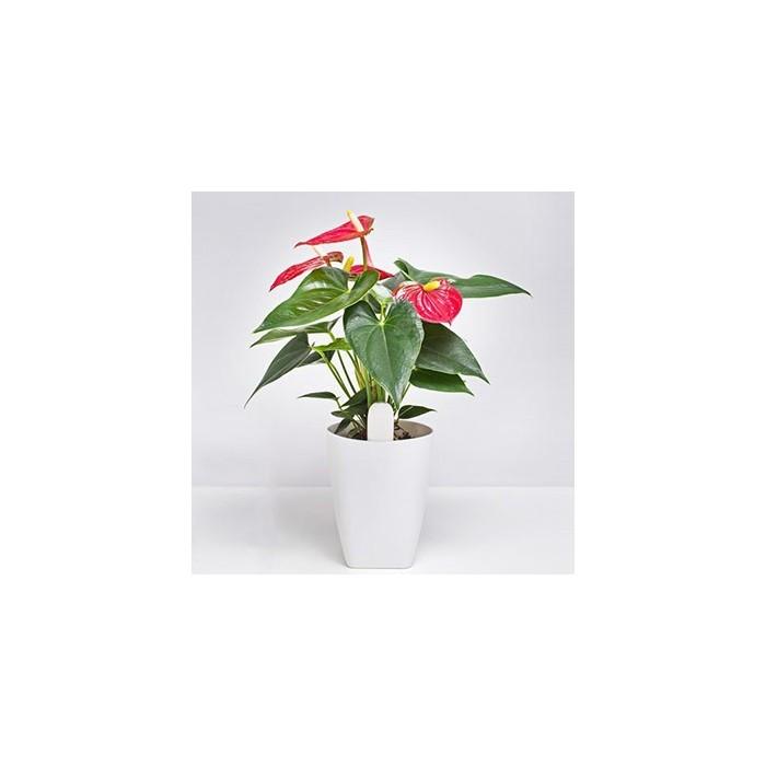 سنسور نظارت بر گل و گیاه شیائومی